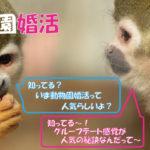 動物園で街コン!?新しい形の婚活パーティー!動物園婚活(動物園コン)とは?|趣味コン|婚活するなら一期一会