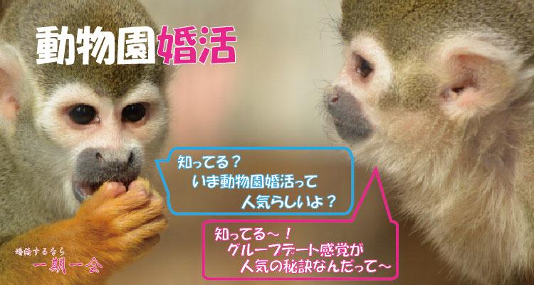趣味コン「動物園婚活って何?」のアイキャッチ画像|大阪で婚活イベント(婚活パーティーや趣味コン)なら一期一会